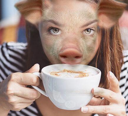 kávémalac