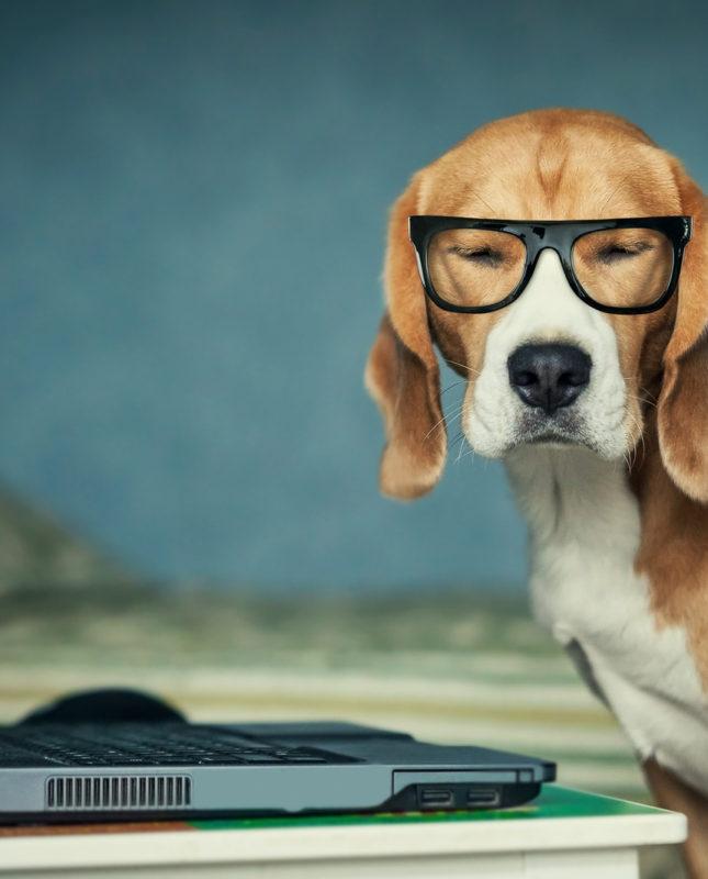beagle randevú Pueblo bekapcsol